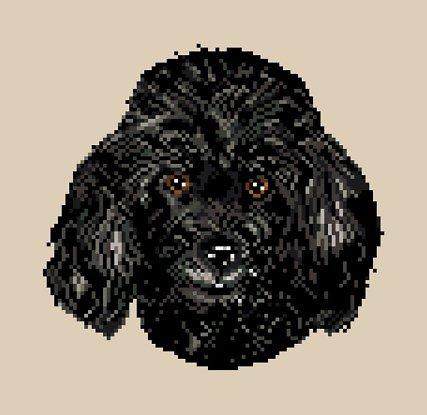 Caniche noir diagramme couleur