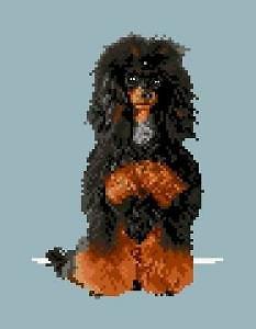 Caniche noir et feu diagramme couleur