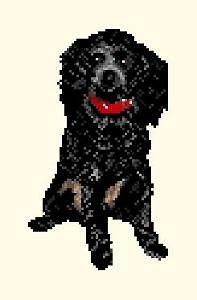 Caniche noir II diagramme couleur