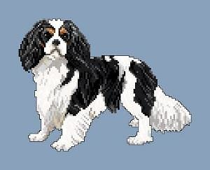 Cavalier king charles diagramme couleur