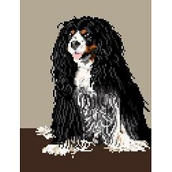 Cavalier king charles II diagramme couleur