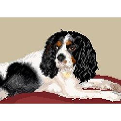 Cavalier king charles III diagramme couleur