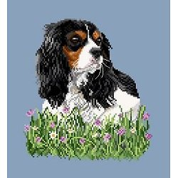 Cavalier king charles IV diagramme couleur