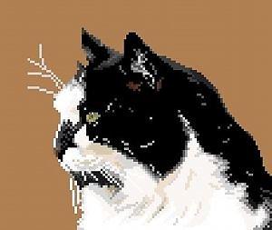 Chat noir et blanc diagramme couleur
