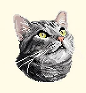 Chat silver tabby diagramme couleur