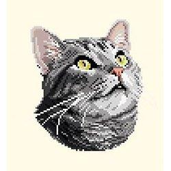 Chat silver tabby diagramme couleur .pdf