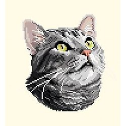 Chat silver tabby diagramme noir et blanc .pdf
