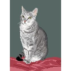 Chat silver tabby II diagramme couleur .pdf