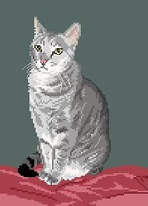 Chat silver tabby II diagramme noir et blanc