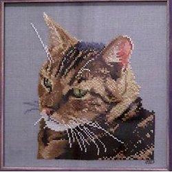 Chat tigré diagramme couleur