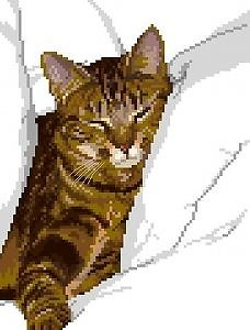 Chat tigré II diagramme couleur