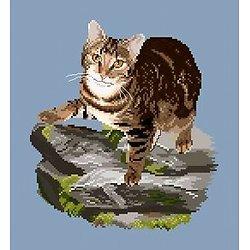 Chat tigré IV diagramme couleur