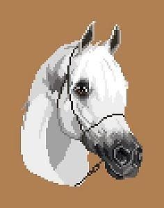 Cheval arabe diagramme noir et blanc