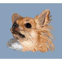 Chihuahua à poils longs diagramme couleur