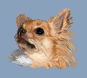 Chihuahua à poils longs diagramme noir et blanc