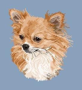 Chihuahua à poils longs II diagramme couleur
