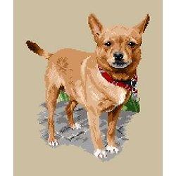 Chihuahua abricot II diagramme noir et blanc