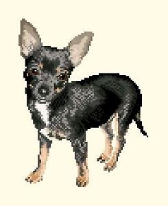 Chihuahua diagramme couleur