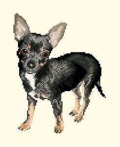 Chihuahua diagramme noir et blanc .pdf