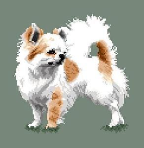 Chihuahua VI diagramme couleur