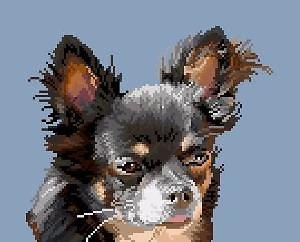 Chihuahua VII diagramme noir et blanc