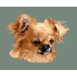 Chihuahua VIII diagramme couleur
