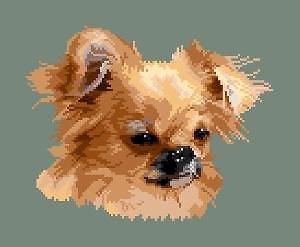 Chihuahua VIII diagramme couleur .pdf