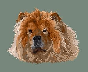Chow-chow fauve III diagramme couleur