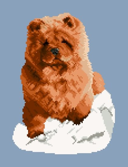Chow-chow rouge diagramme couleur