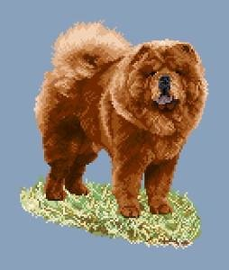 Chow-chow rouge II diagramme couleur