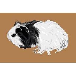 Cochon d'Inde diagramme couleur