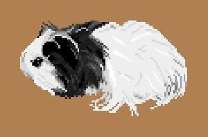 Cochon d'Inde diagramme noir et blanc
