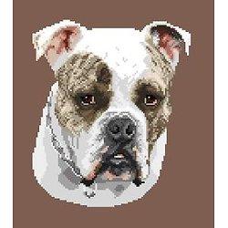 Continental bulldog diagramme couleur