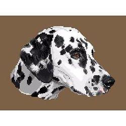 Dalmatien diagramme noir et blanc