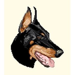 Dobermann diagramme couleur