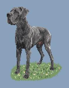 Dogue allemand bleu diagramme couleur .pdf