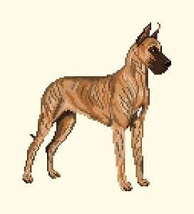 Dogue allemand diagramme couleur