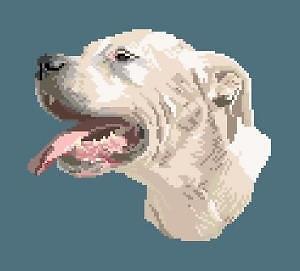 Dogue argentin diagramme couleur