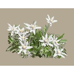 Edelweiss diagramme couleur