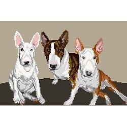 Famille de bulls terriers diagramme couleur