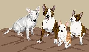 Famille de bulls terriers II diagramme couleur