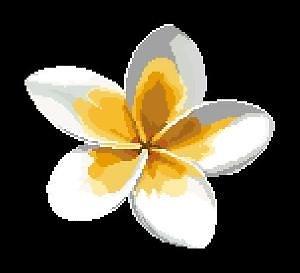 Fleur de frangipanier diagramme couleur