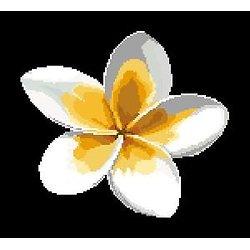 Fleur de frangipanier diagramme couleur .pdf