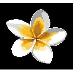 Fleur de frangipanier diagramme noir et blanc