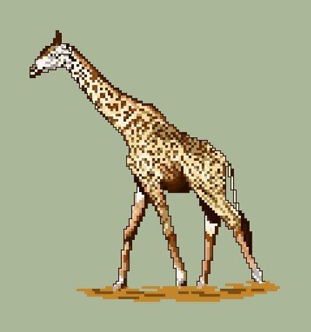 Girafe diagramme couleur