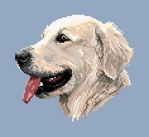 Golden retriever diagramme noir et blanc .pdf