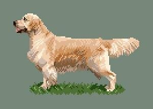 Golden retriever entier diagramme couleur .pdf