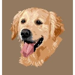 Golden retriever II diagramme couleur .pdf