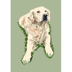 Golden retriever III diagramme couleur .pdf