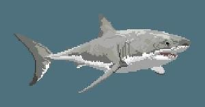 Grand requin blanc diagramme couleur